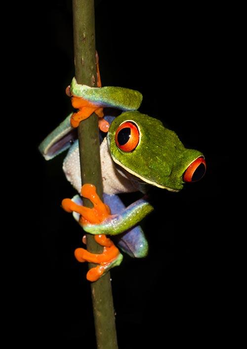 Niklas Weber - Costa Rica - Paradies zwischen zwei Ozeanen - Stadthalle Holzgerlingen